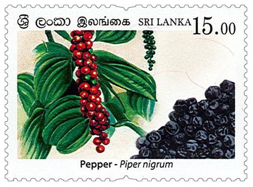 Spices of Sri Lanka - 2019 - Pepper (02/04)