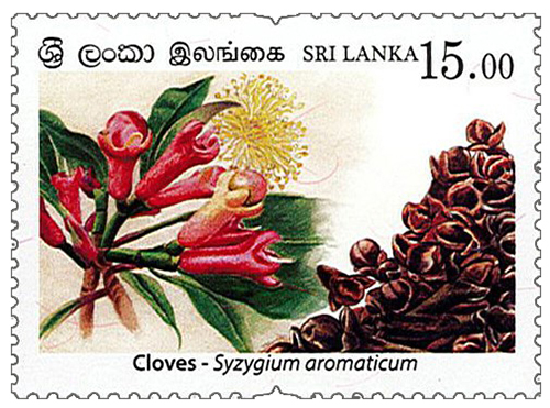 Spices of Sri Lanka - 2019 - Cloves (03/04)