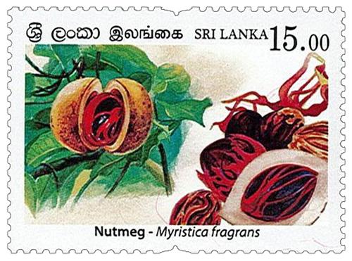 Spices of Sri Lanka - 2019 - Nutmeg (04/04)