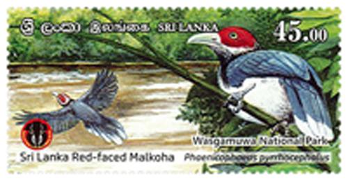 National Parks of Sri Lanka - Wasgamuwa National Park(6/6) - 2019(Sri Lanka Red - Faced Malkoha)