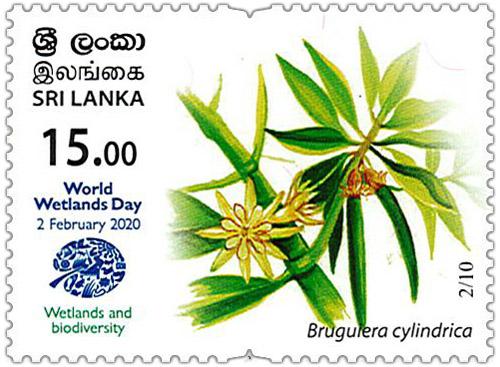 World Wetlands Day - 2020 - 02/10 (Bruguiera cylindrica)