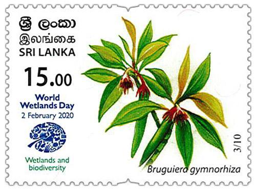 World Wetlands Day - 2020 - 03/10 (Bruguiera gymnorhiza)
