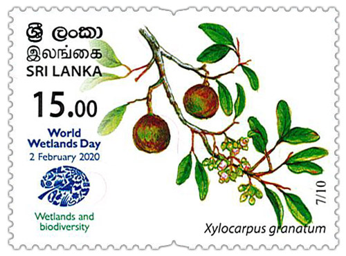 World Wetlands Day - 2020 - 07/10 (Xylocarpus granatum)