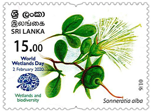 World Wetlands Day - 2020 - 09/10 (Sonneratia alba)