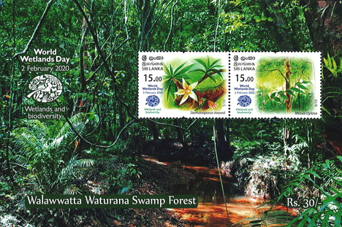 World Wetlands Day(ss) Walawwatta Waturana Swamp Forest - 2020 (2/3)