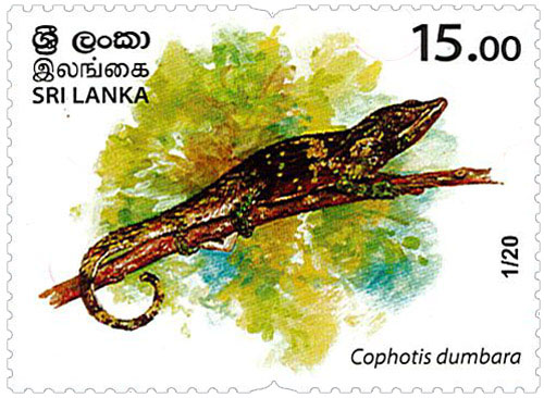 Wild species threatened by trade in Sri Lanka - 2020 - 01/20 (Cophotis dumbara)