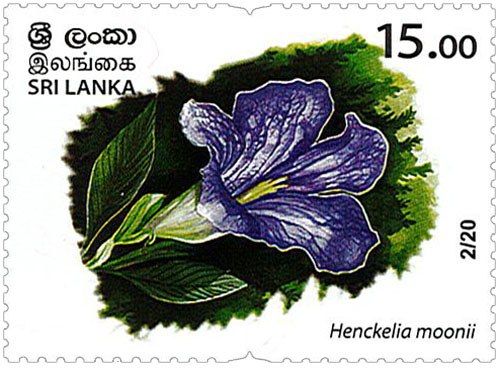 Wild species threatened by trade in Sri Lanka - 2020 - 02/20 (Henckelia moonii)