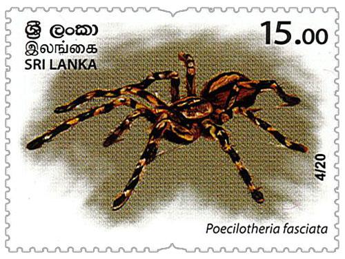 Wild species threatened by trade in Sri Lanka - 2020 - 04/20 (Poecilotheria fasciata)