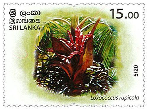 Wild species threatened by trade in Sri Lanka - 2020 - 05/20 (Loxococcus rupicola)