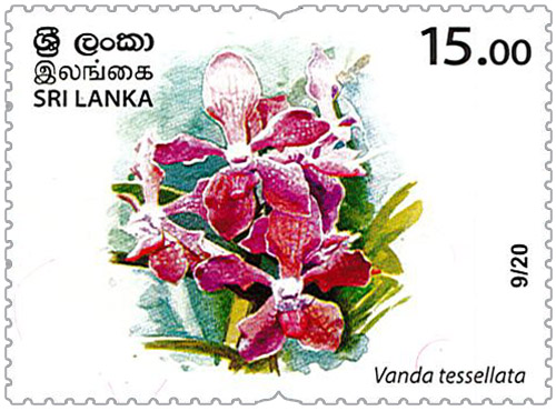 Wild species threatened by trade in Sri Lanka - 2020 - 09/20 (Vanda tessellata)