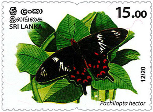 Wild species threatened by trade in Sri Lanka - 2020 - 12/20 (Pachliopta hector)