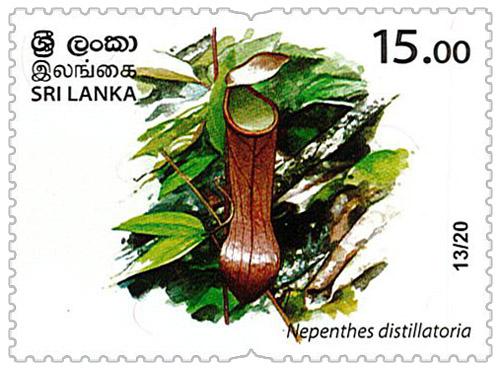 Wild species threatened by trade in Sri Lanka - 13/20 (Nepenthes distillatoria)