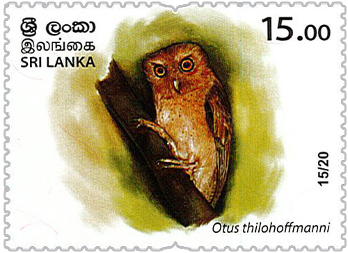 Wild species threatened by trade in Sri Lanka - 2020 - 15/20 (Otus thilohoffmanni)