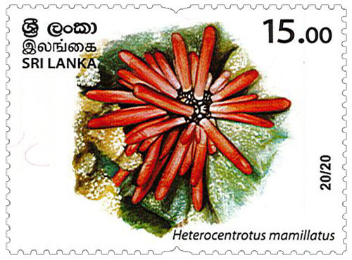 Wild species threatened by trade in Sri Lanka - 2020 - 20/20 (Heterocentrotus mamillatus)